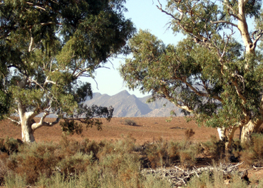 The beautiful Flinders Ranges. The scene of a tragic family accident